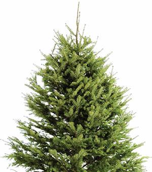 dec_tree